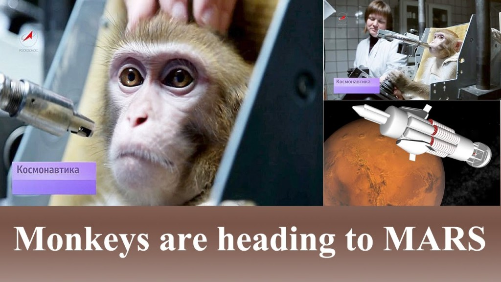 Russians Are Training Monkeys For A Mission To Mars 3