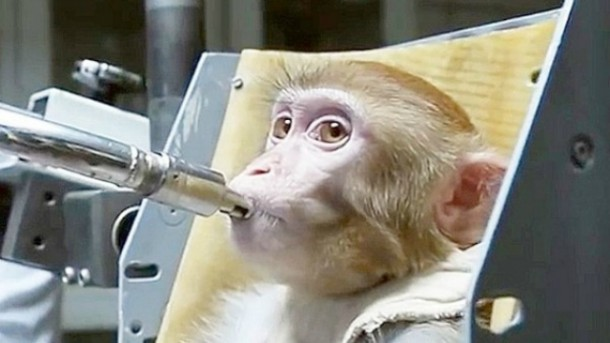 Russians Are Training Monkeys For A Mission To Mars 4