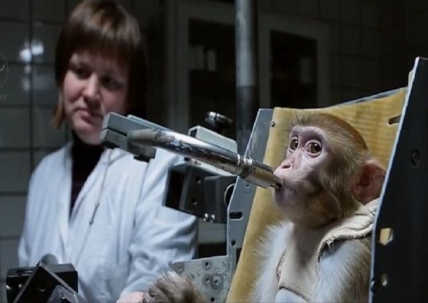 Russians Are Training Monkeys For A Mission To Mars