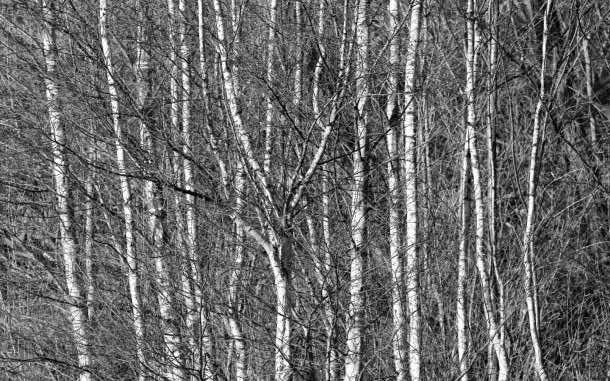 Silver Wallpaper 43