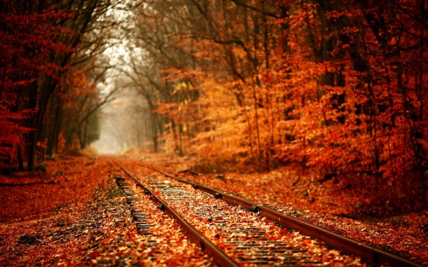 fall wallpaper 11
