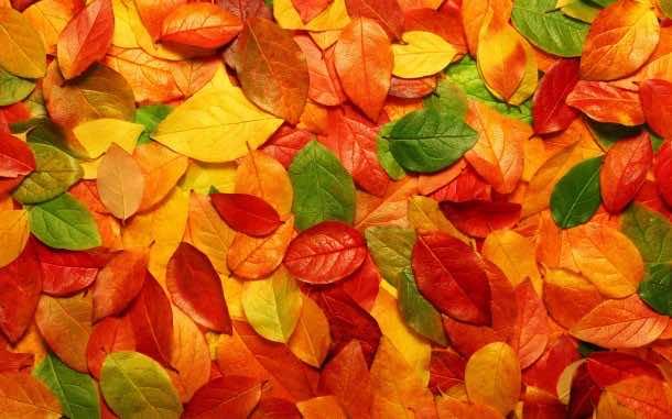 fall wallpaper 12