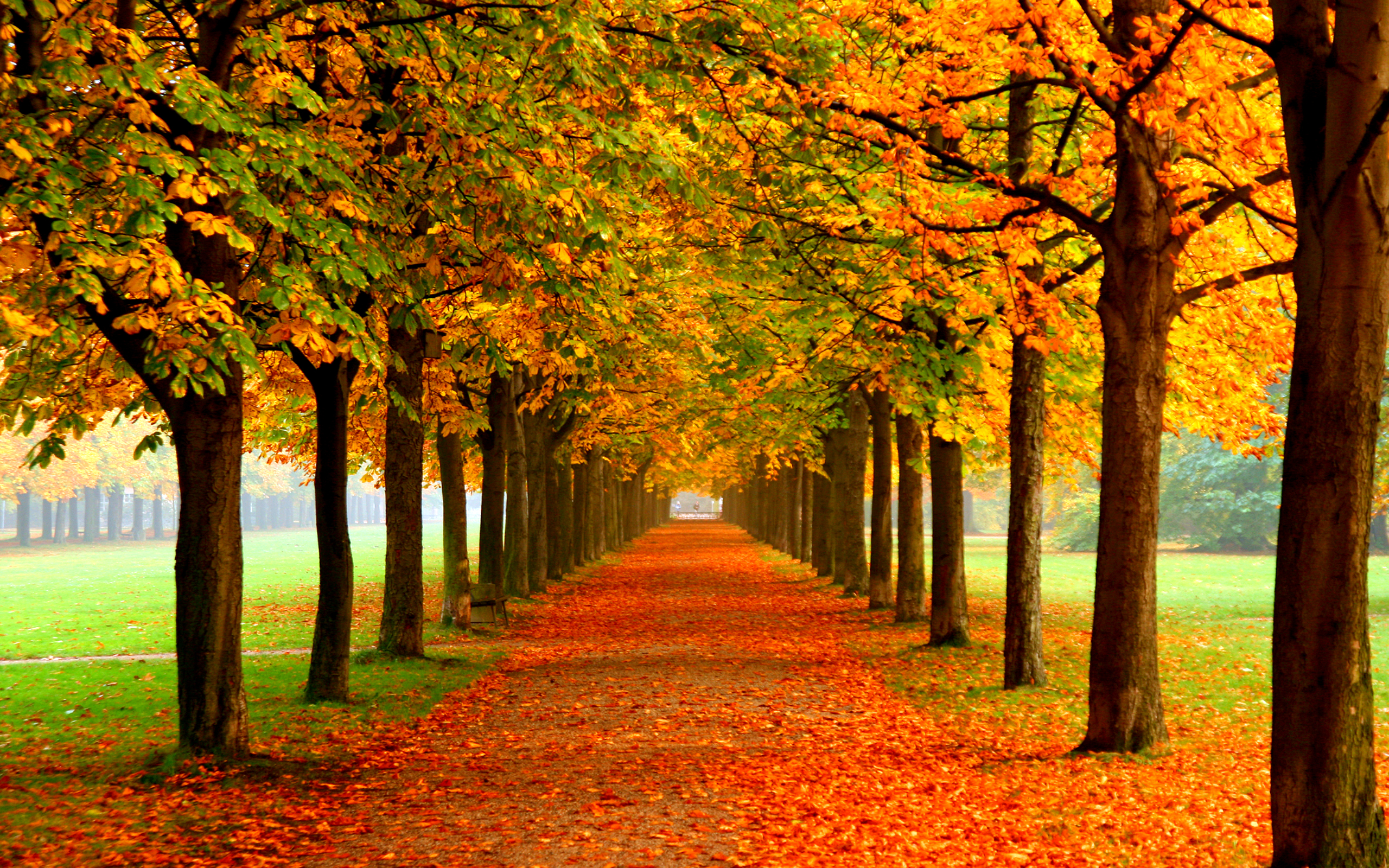 55 Fall Wallpaper Backgrounds For Your Desktop And Laptop