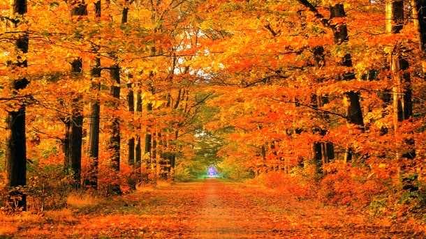 fall wallpaper 15