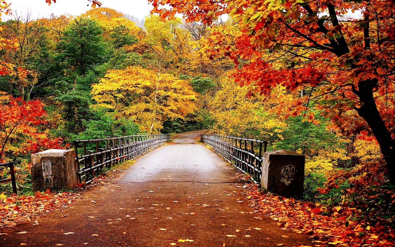 Fall Nature Backgrounds Wallpaper 16 F