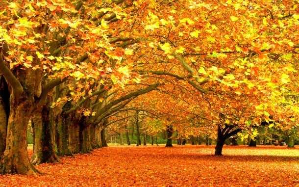 fall wallpaper 18