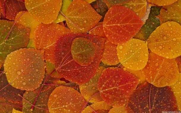 fall wallpaper 19