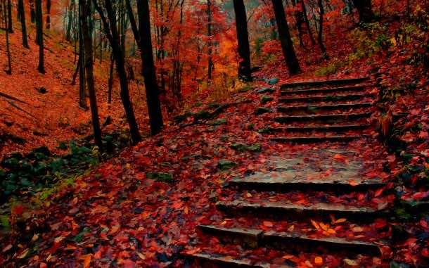 fall wallpaper 22