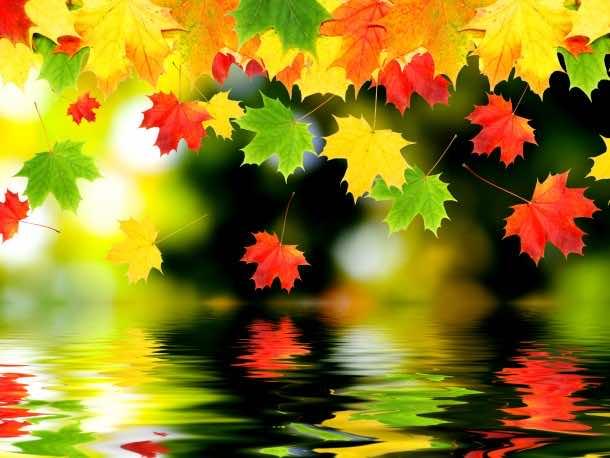 fall wallpaper 23