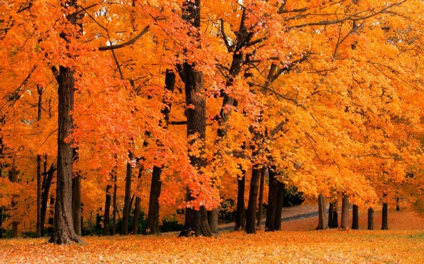 fall wallpaper 24