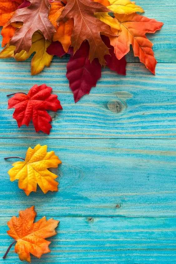 fall wallpaper 32
