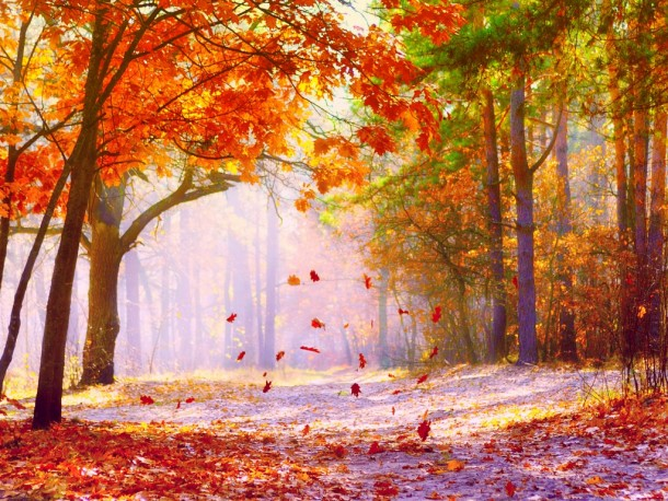 fall wallpaper 33