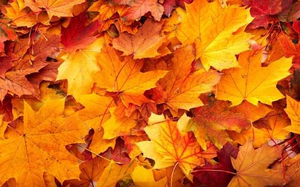 fall wallpaper 35