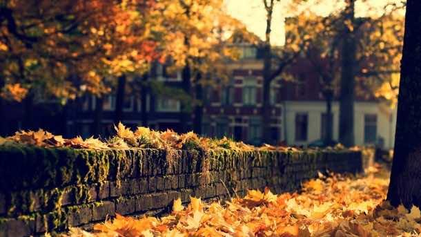 fall wallpaper 41