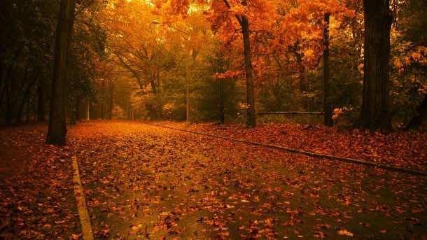 fall wallpaper 43