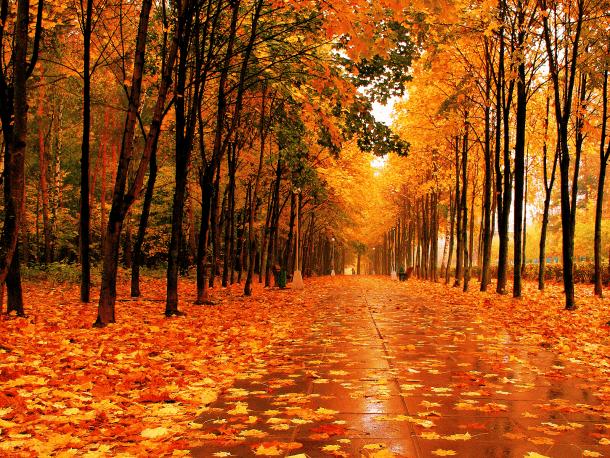fall wallpaper 44