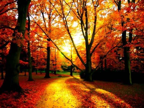 fall wallpaper 46
