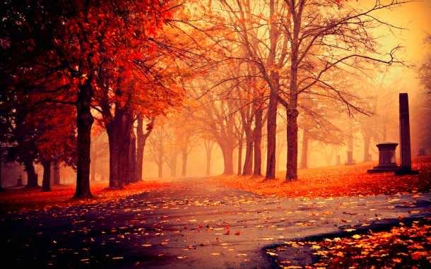fall wallpaper 48