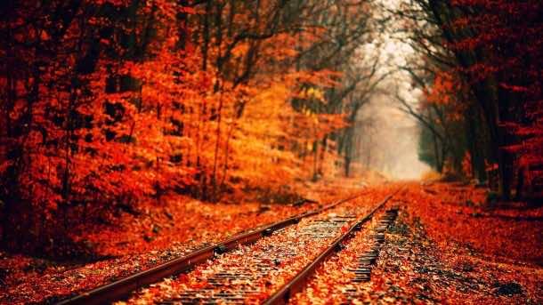 fall wallpaper 51