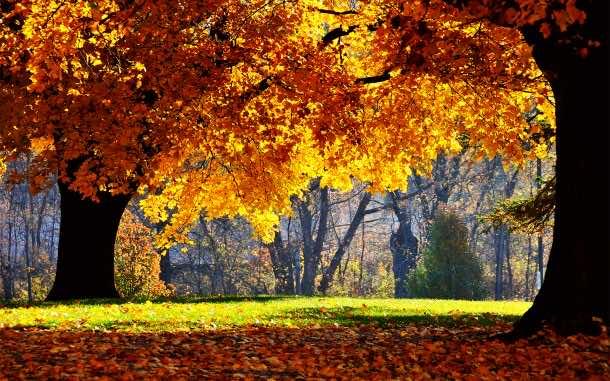 fall wallpaper 53