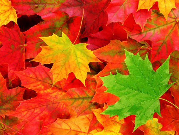 fall wallpaper 6