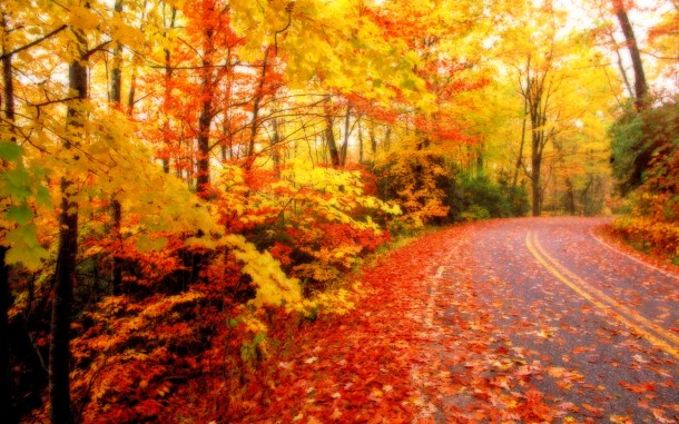 fall wallpaper 9