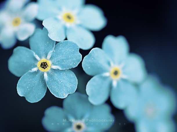wallpaper flower 001