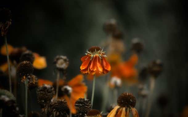 wallpaper flower 005