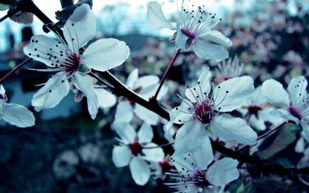 wallpaper flower 006