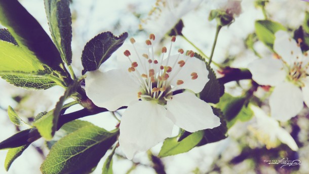 wallpaper flower 007