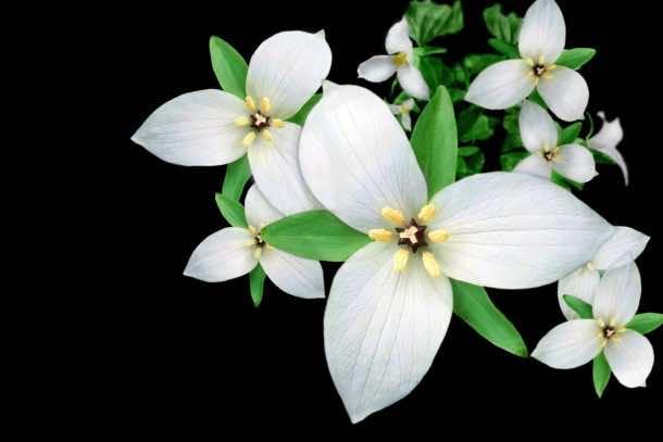 wallpaper flower 008