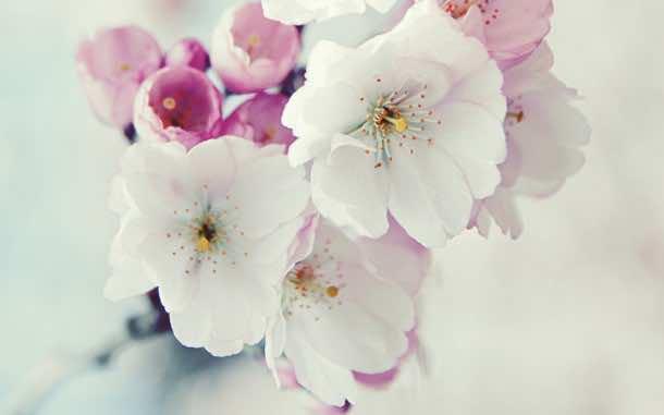 wallpaper flower 010