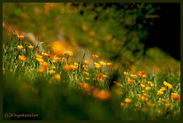 wallpaper flower 012