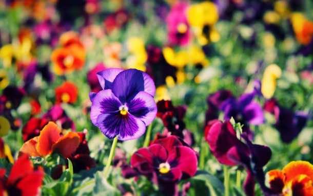 wallpaper flower 03