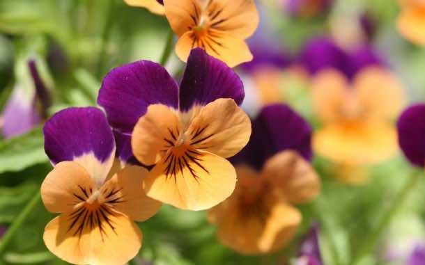 wallpaper flower 05