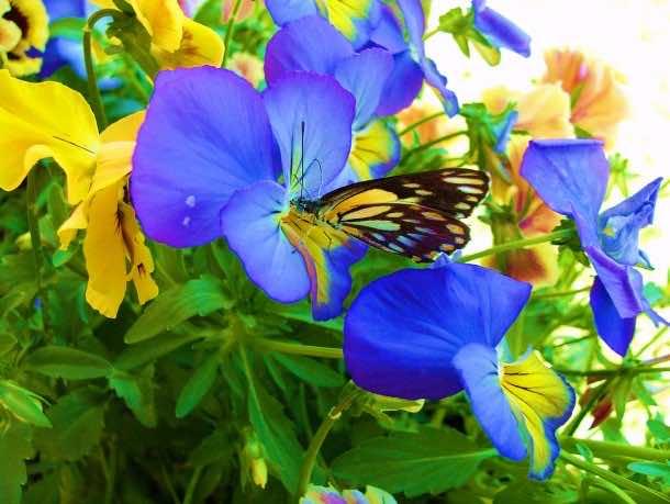 wallpaper flower 06