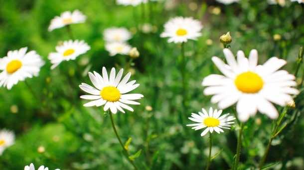 wallpaper flower 12