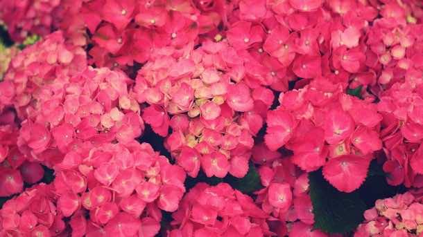 wallpaper flower 13