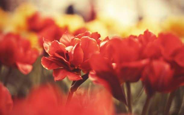 wallpaper flower 17