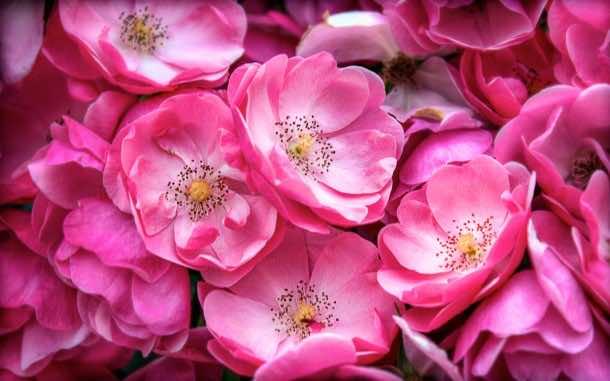 wallpaper flower 19