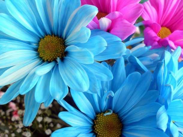 wallpaper flower 2