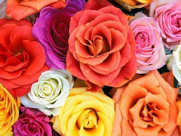 wallpaper flower 20