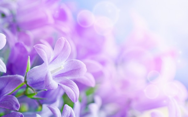wallpaper flower 22