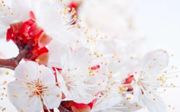 wallpaper flower 25