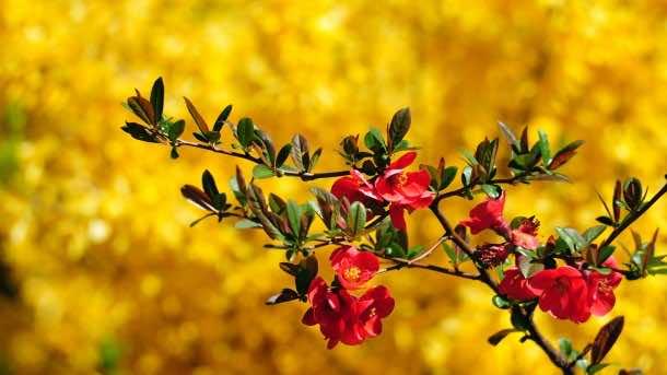 wallpaper flower 31