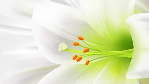 wallpaper flower 32