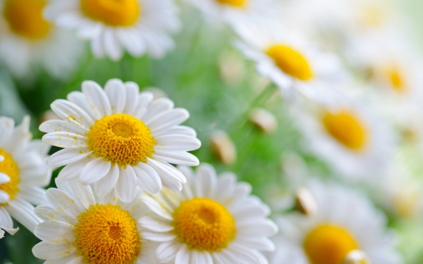 wallpaper flower 4
