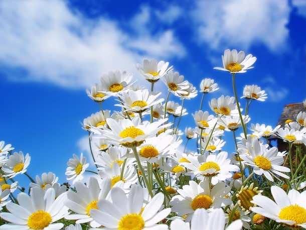 wallpaper flower 6