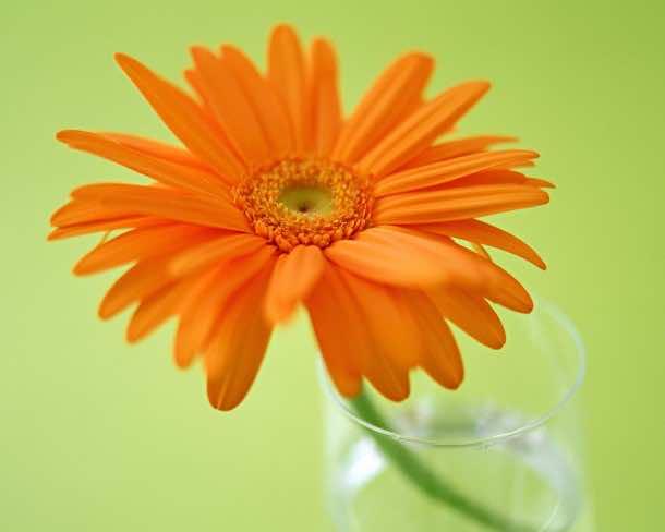 wallpaper flower 8
