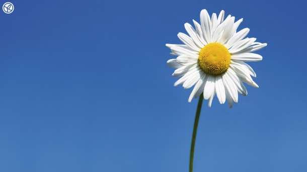 wallpaper flower 9